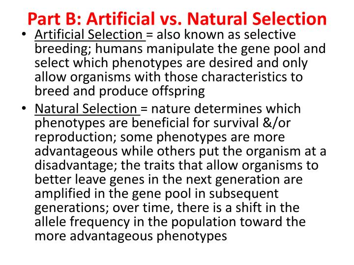 Part B: Artificial vs. Natural Selection