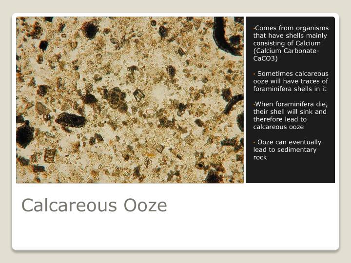 Comes from organisms that have shells mainly consisting of Calcium (Calcium Carbonate- CaCO3)