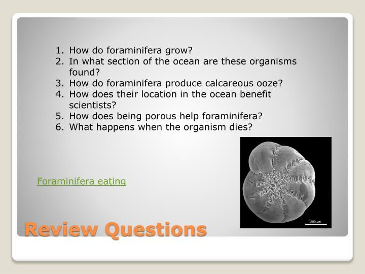 How do foraminifera grow?