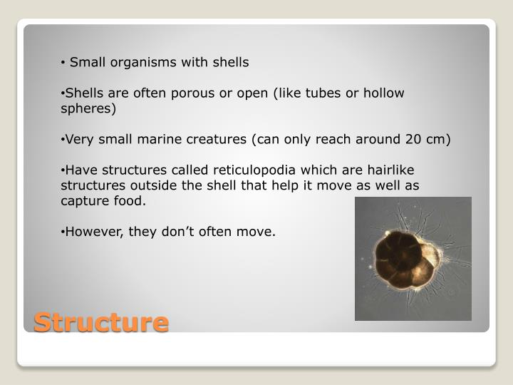 Small organisms with shells