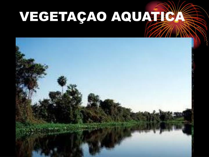 VEGETAÇAO AQUATICA