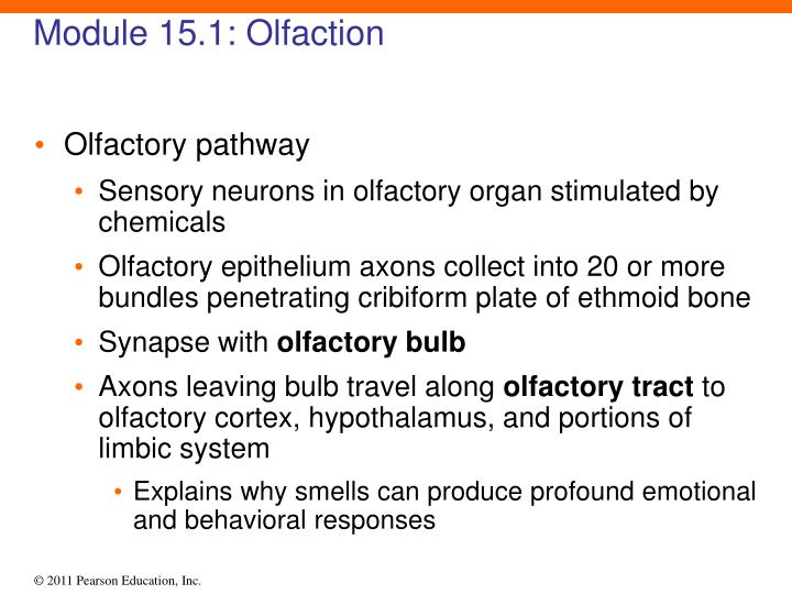 Module 15.1: Olfaction