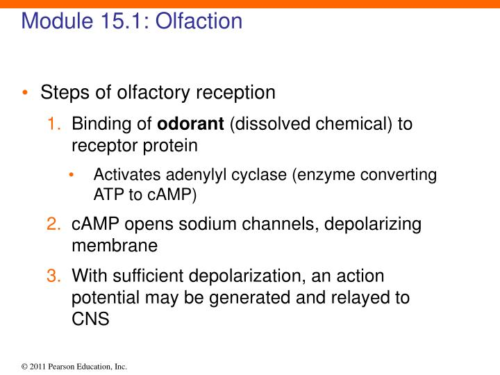 Module 15.1: Olfaction