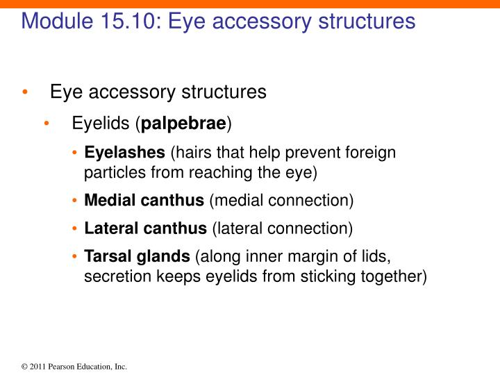 Module 15.10: Eye accessory structures