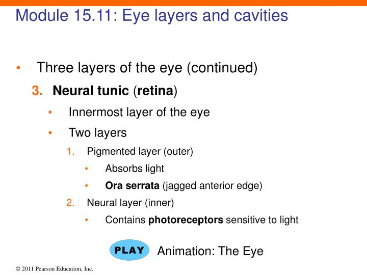 Module 15.11: Eye layers and cavities