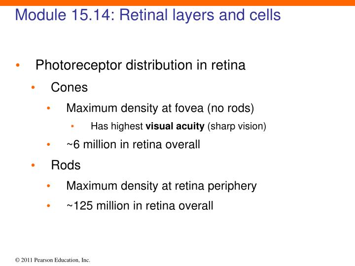 Module 15.14: Retinal layers and cells