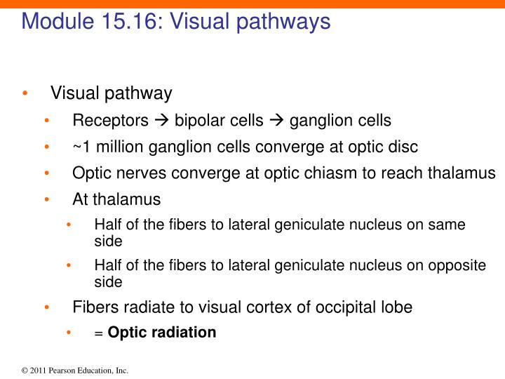 Module 15.16: Visual pathways