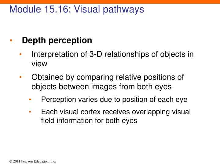 Module 15.16: Visual pathways