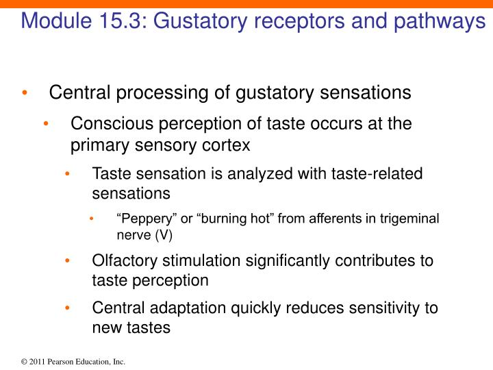 Module 15.3: Gustatory receptors and pathways