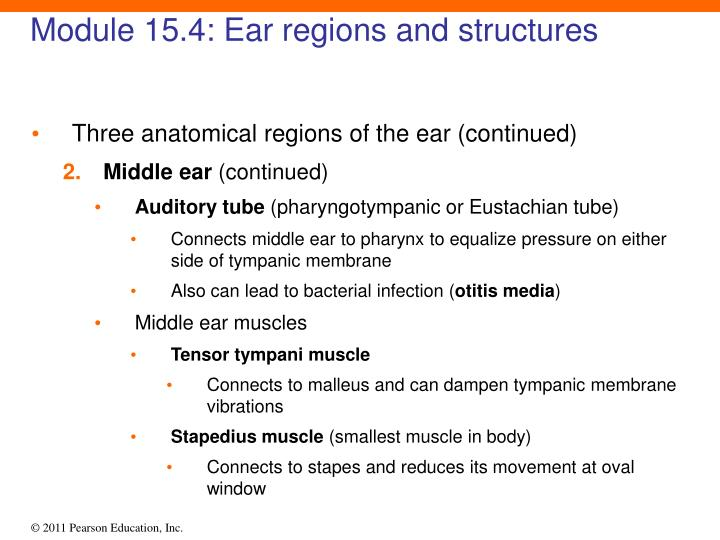 Module 15.4: Ear regions and structures