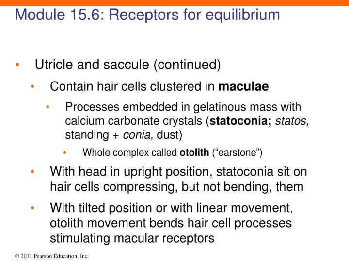 Module 15.6: Receptors for equilibrium