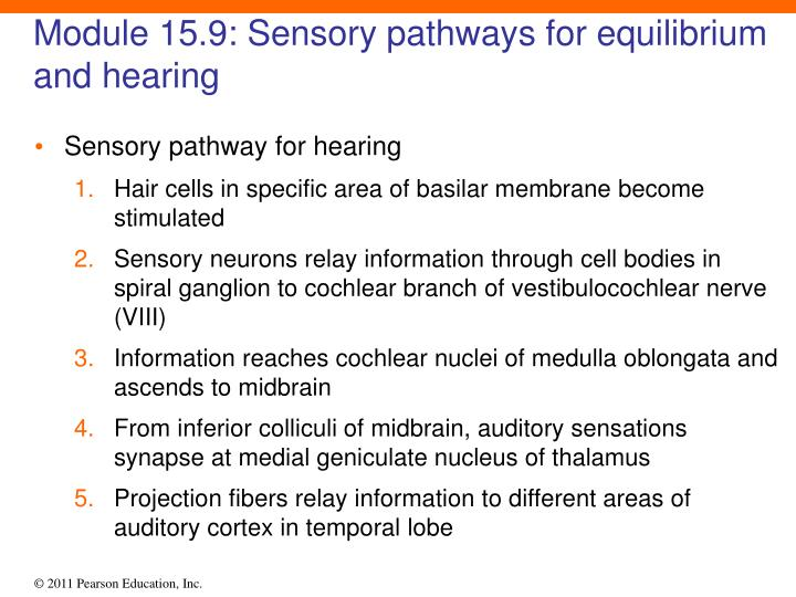 Module 15.9: Sensory pathways for equilibrium and hearing