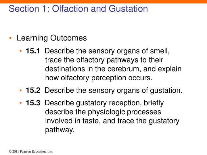 Section 1 olfaction and gustation