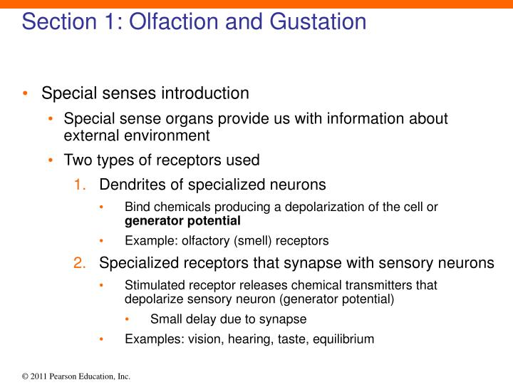 Section 1 olfaction and gustation1