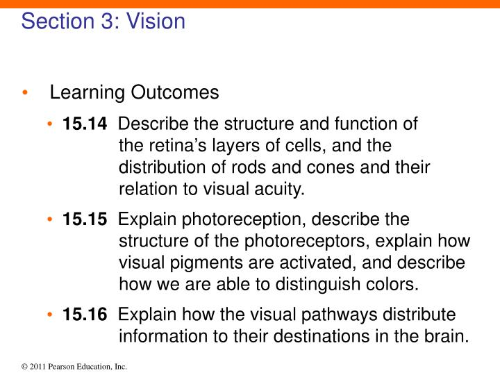 Section 3: Vision