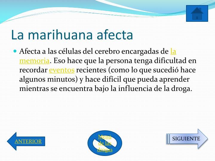 La marihuana afecta