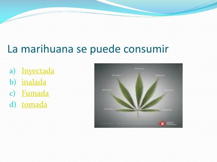 La marihuana se puede consumir