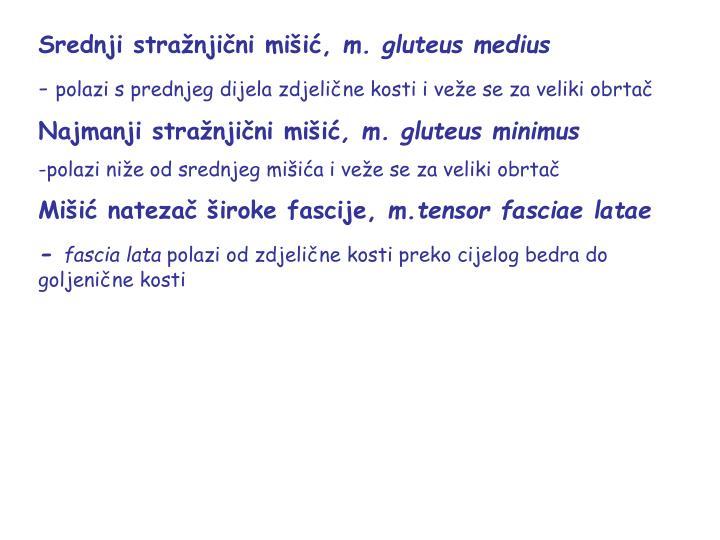 Srednji stražnjični mišić,