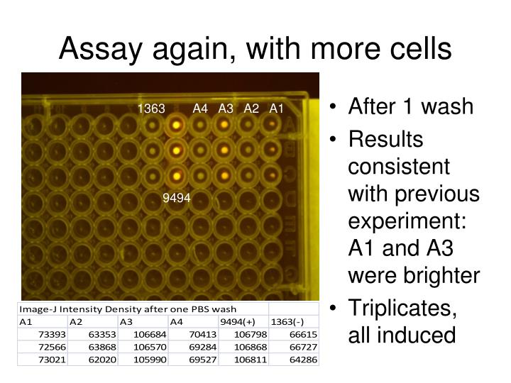 Assay again, with more cells