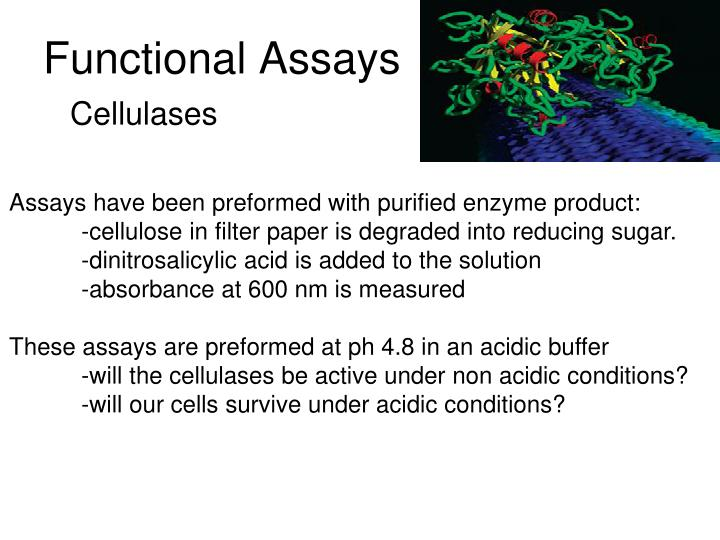 Functional Assays