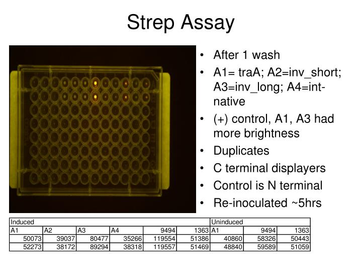 Strep Assay