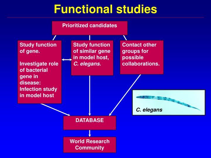 Functional studies