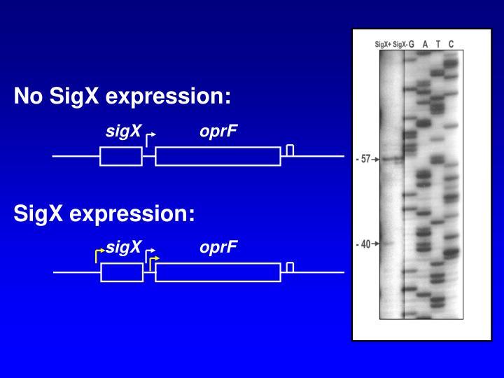No SigX expression: