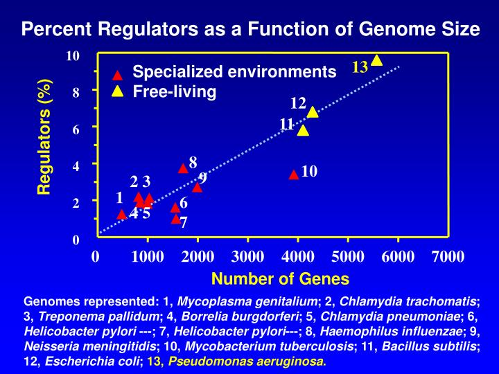 Percent Regulators as a Function of Genome Size