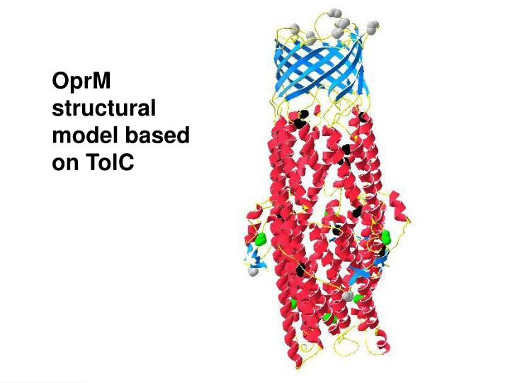 OprM structural model based on TolC