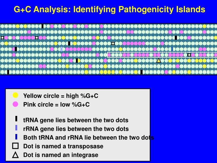 G+C Analysis: Identifying Pathogenicity Islands