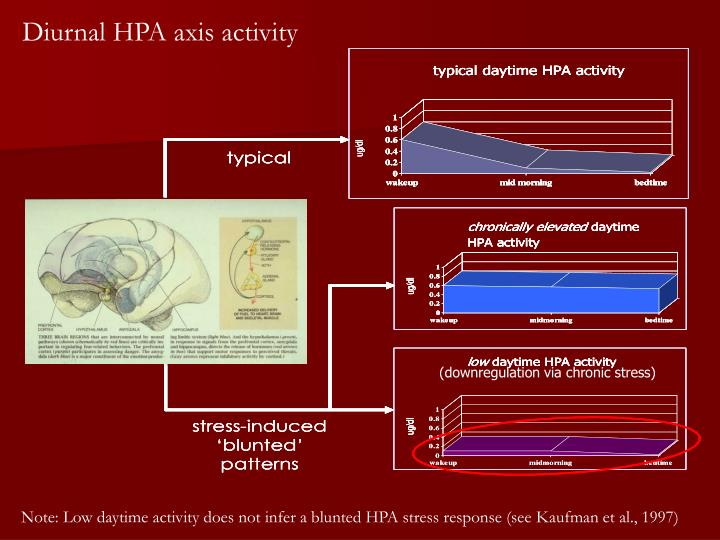 Diurnal HPA axis activity