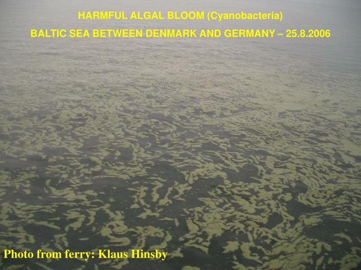 HARMFUL ALGAL BLOOM (Cyanobacteria)