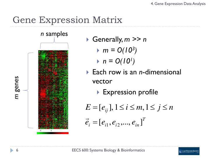 Gene Expression Matrix