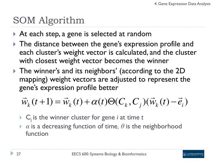 SOM Algorithm