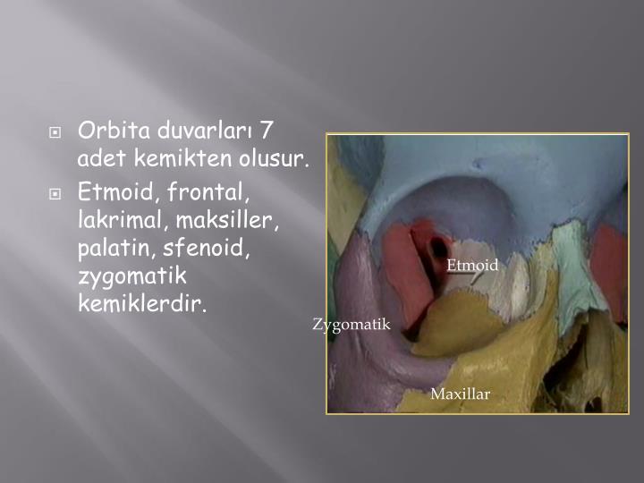 Orbita duvarları 7 adet kemikten