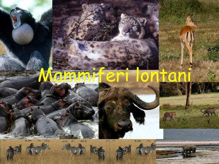 Mammiferi lontani