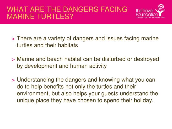 WHAT ARE THE DANGERS FACING MARINE TURTLES?