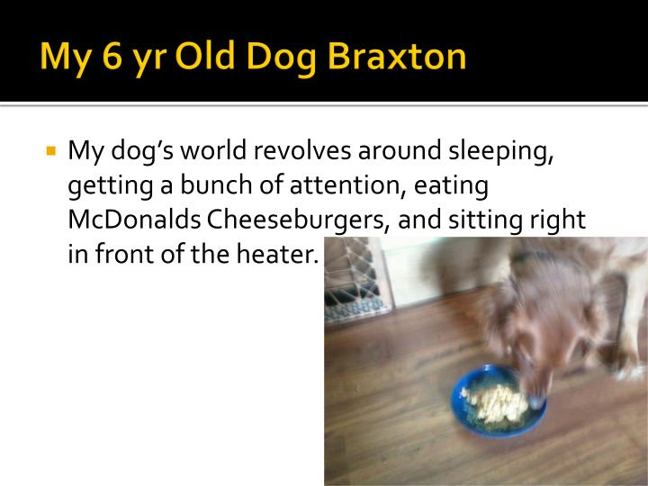 My 6 yr Old Dog Braxton