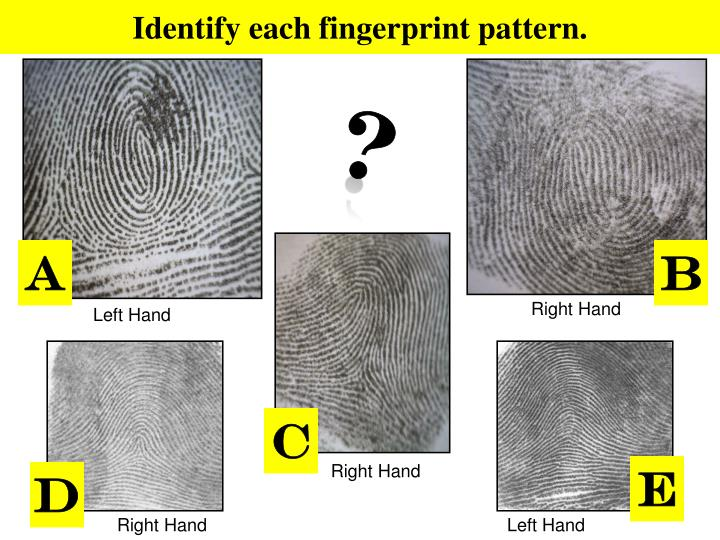 Identify each fingerprint pattern.