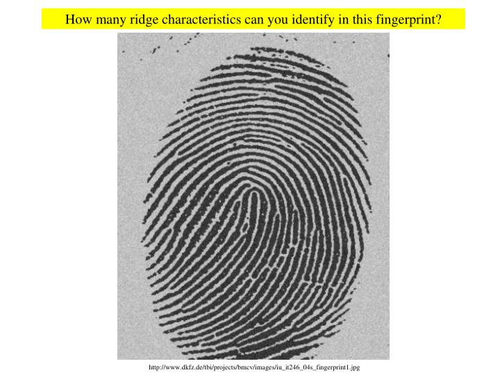 http://www.dkfz.de/tbi/projects/bmcv/images/iu_it246_04s_fingerprint1.jpg