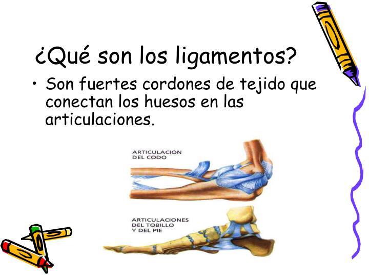 ¿Qué son los ligamentos?