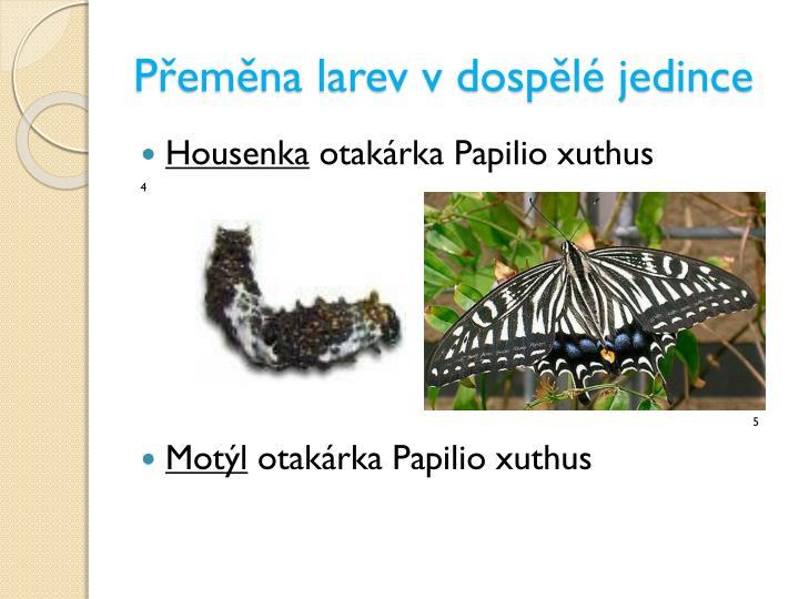 Přeměna larev v dospělé jedince