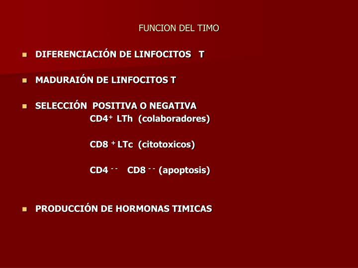 FUNCION DEL TIMO