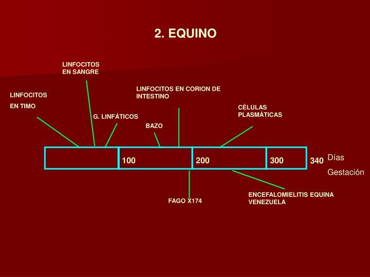 2. EQUINO