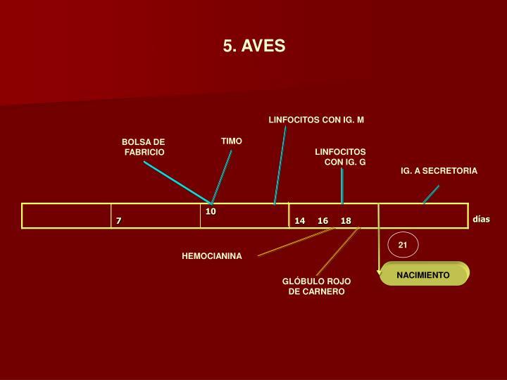 5. AVES