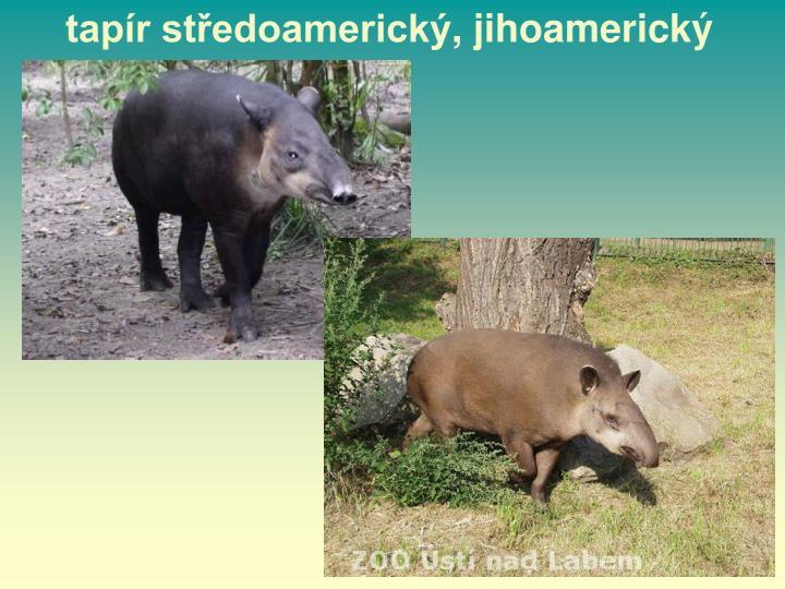 tapír středoamerický