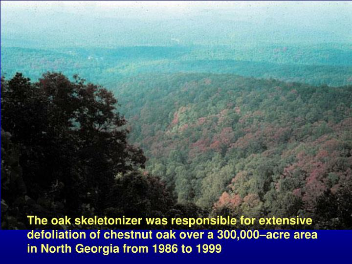 The oak skeletonizer was responsible for extensive