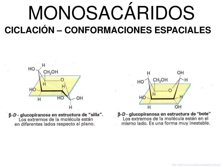 MONOSACÁRIDOS