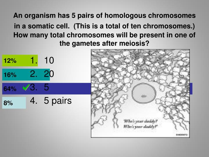 An organism has 5 pairs of homologous chromosomes in a somatic cell.  (This is a total of ten chromosomes.)