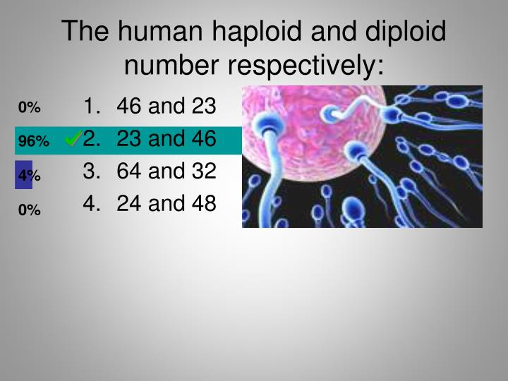 The human haploid and diploid number respectively: